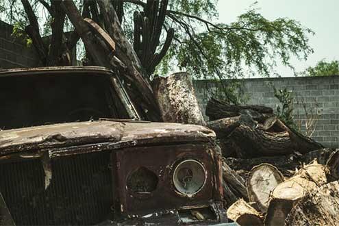 Tree-Service-Wayne-County-MI-Storm-Damage